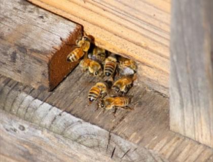 蜂の巣の駆除